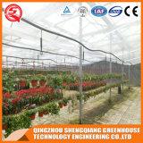 Casa verde de vidro da flor vegetal agricultural de Venlo