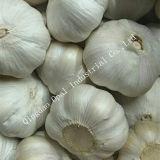 10kg carton blanc pur de la neige de légumes frais de l'ail