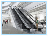 En plein air Coffre et confortable escalators commerciaux
