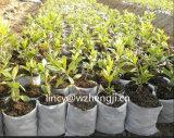 Prodotto non intessuto UV di resistenza pp di 3% per il coperchio del raccolto di agricoltura del coperchio della pianta