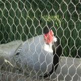 직류 전기를 통한 6각형 철망사 닭 메시