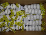 Nuovo Season Crop Garlic (4.5cm, 5.5cm, 5.5cm, 6.0cm)