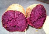 Haute qualité Patato doux 100% naturel extrait d'anthocyanine