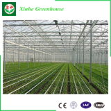 Serre chaude intelligente de feuille de polycarbonate pour la plantation