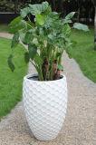 Colorful Finish를 가진 Fo 319 Fiberglass Flower Egg Plant Pots