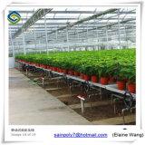 Folha de PC de gases com efeito de morango e outros produtos hortícolas