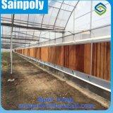 Chambre verte de film de qualité d'usine de la Chine pour la tomate