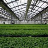 저가 고품질 식물성 성장하고 있는 PC 녹색 집