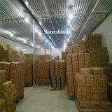 Gemüsefrucht-Nahrungsmittelspeicher-Kühlraum-Logistik-Mitte