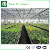 Casa verde dos sistemas hidropónicos da folha do PC para o tomate