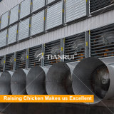 ガーナの家禽の養鶏場のための保証電池ケージの層