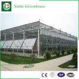 Invernadero de cristal del precio de fábrica con el sistema hidropónico para la agricultura