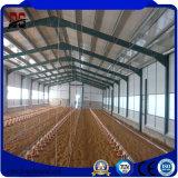Het nieuwe Huis van de Kip van het Landbouwbedrijf van het Gevogelte van de Structuur van het Staal van het Ontwerp Automatische
