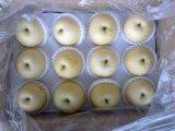 Pera dorata cinese della parte superiore della frutta fresca del rifornimento
