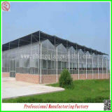 Singolo-Span PC Sheet Greenhouses Favorable/dell'annuncio pubblicitario con Professional Manufacturer
