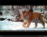 Bestguarder 12MP 1080P IR kundschaftende Jagd-Spiel-Kamera der Kamera-Sg-009 mit Befund-Reichweite bis zu 75FT