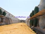 Macchinario della Camera di pollicultura con installazione d'acciaio chiara prefabbricata