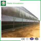Tuin/de Serre van het Blad van het Polycarbonaat van de Tunnel van de Landbouw voor het Groeien van de Groente/van de Bloem