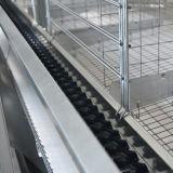 Couche de poulet de type H Cage avec buveur de système d'alimentation automatique