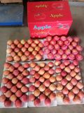 FUJI rosso dolce/croccante Apple