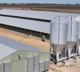 Châssis en acier à faible coût de la structure de la Chambre poulailler préfabriqués dans les élevages de volailles