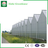 High quality Agricultural PC Covered Greenhouse by Xinhe company