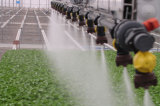 Multi-Span 10 mètres de film plastique pour les légumes de serre