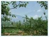 100% нового HDPE парниковых сельского хозяйства против сеток от насекомых