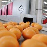 Equipo de granja del criador con el sistema de control ambiental automático
