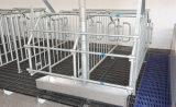 Клеть беременность оборудования свиньи для хавроньи в 2017