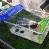 [أكقوريوم] منتوج سمكة سلحفاة قصع بلاستيكيّة محبوب شركة نقل جويّ