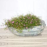 Nuovi Flowerpots di rivestimento del granito delle serie dell'oceano