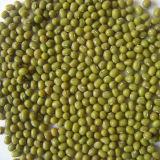 最高品質の新しい穀物の緑の腎臓豆