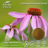 Выдержка Purpurea Echinacea 100% естественная (полифенолы 4%, кислота 4% Cichoric, 4:1 ~20: 1)