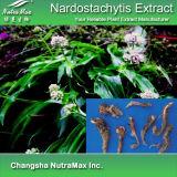 100% натуральные Nardostachyos извлечения (4 1 5 1 10 1 20: 1)