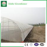 Земледелие/дома коммерчески тоннеля полиэтиленовой пленки зеленые для клубники/Rose