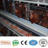 Systeem van de Ventilatie van de Apparatuur van het Landbouwbedrijf van het Gevogelte van de Kooi van de Kip van de laag het Automatische