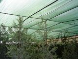 مظلة شبكة مضادّة [سون] شبكة لأنّ حماية زراعة [نرسوري]