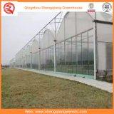 Casa verde Single-Layer de película plástica da Único-Extensão com construção de aço