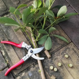Профессиональные инструменты в саду у поставщика цветочного листа триммер Pruner отрезные ножницы