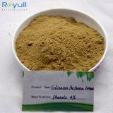 Выдержка Purpurea Echinacea большого части выдержки травы завода