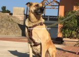 De Uitrusting van de Hond van het Leer van de Levering van het huisdier voor Grote Honden