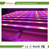 Keisue 플랜트 공장 LED는 전등 설비를 증가한다