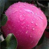 Voedsel van de Vitamine van de Geschiktheid van de Gezondheid van de Appelen van het fruit het Organische
