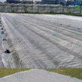 tessuto/stuoia non tessuti di controllo di /Weed del tessuto del coperchio di agricoltura di larghezza di 10.2m