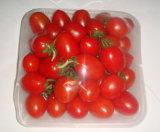 PLC steuern das Gemüseshrink-Maschinen-Gemüse, das Maschinerie einwickelt