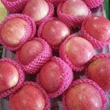 Buona qualità Qinguan fresco Apple del nuovo raccolto