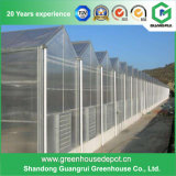 Multi-Span Venlo Type Polycarbonate / PC Sheet Greenhouse for Plant