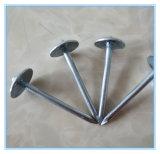 Noyaux de fer galvanisés à la ronde commune de qualité supérieure / clous de toiture