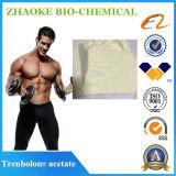 Bodybuilding-Chemikalien Steroid Trenbolones Azetat rohes Powder99%